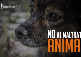 Leyes para proteger a mascotas en México
