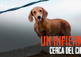 México y el maltrato de los animales